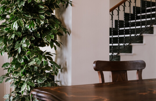 piante-design