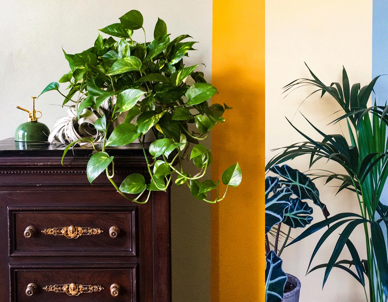 piante studio